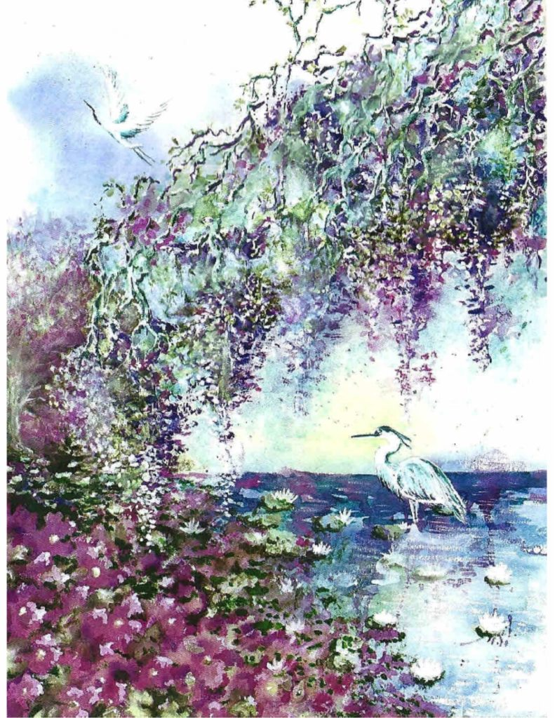 Wisteria on Water Lily Pond